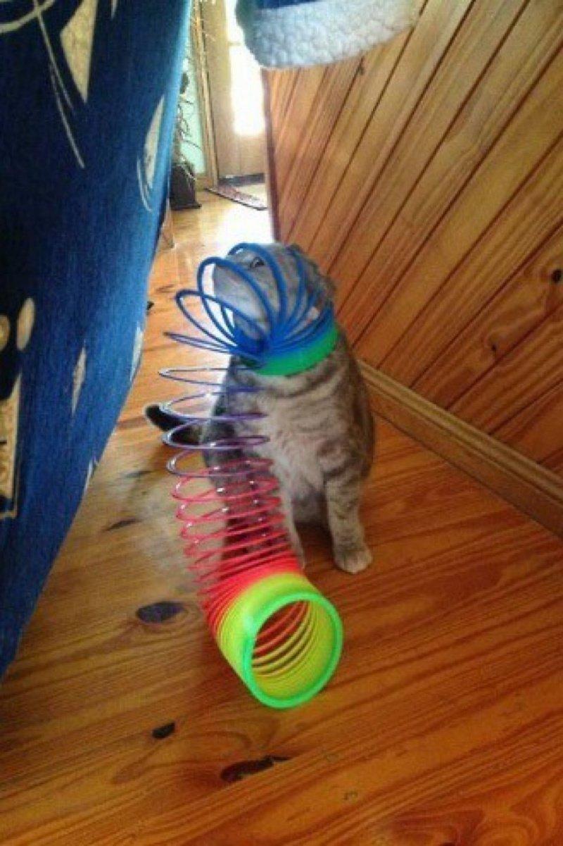 Котики, у которых серьёзные проблемы