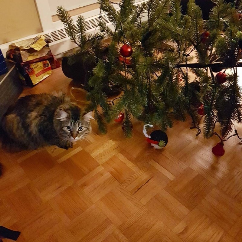 Котики у которых серьёзные проблемы