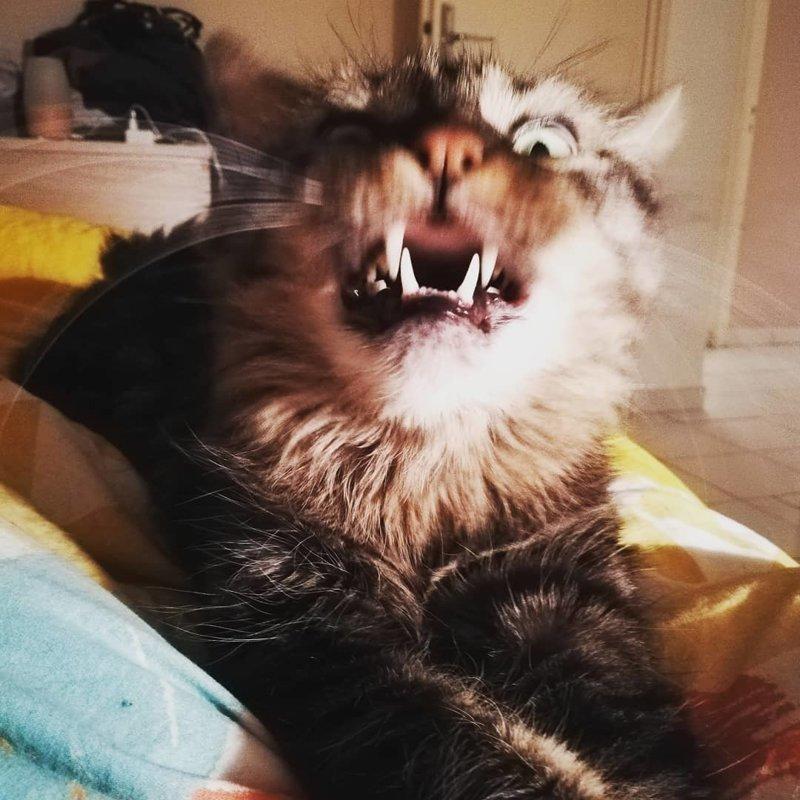 Милые снимки чихающих котиков