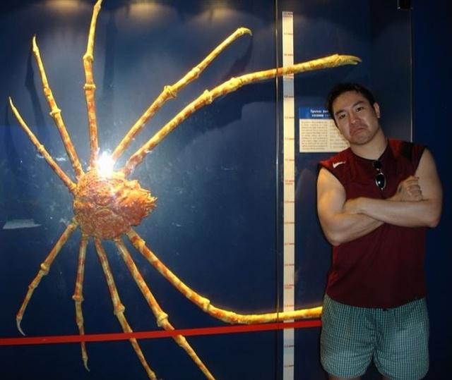 Огромные создания удивляют своими размерами