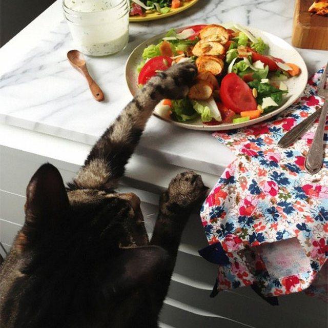 Милые и забавные коты-воришки
