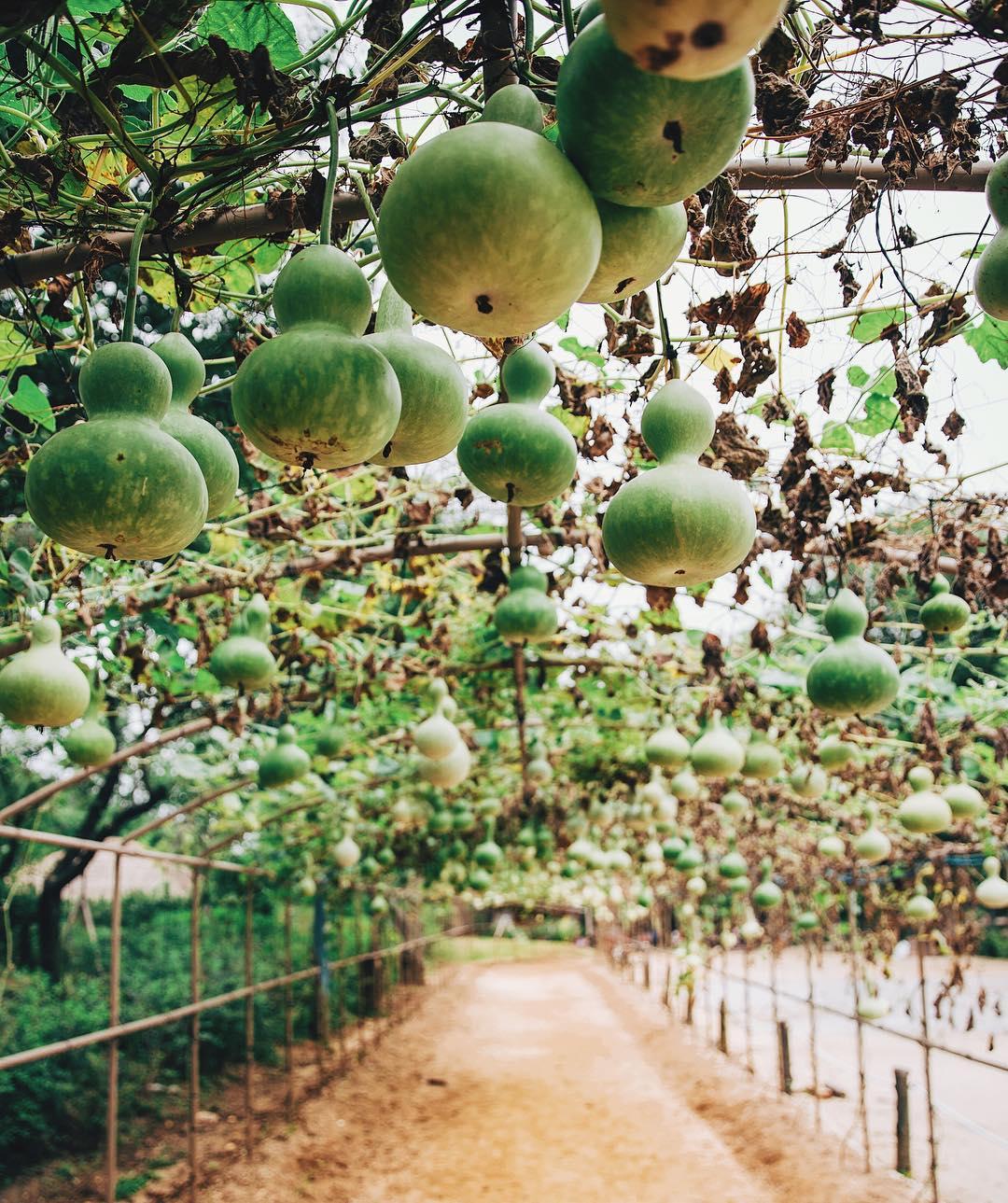Природа и путешествия на снимках Ахмета Эрдема