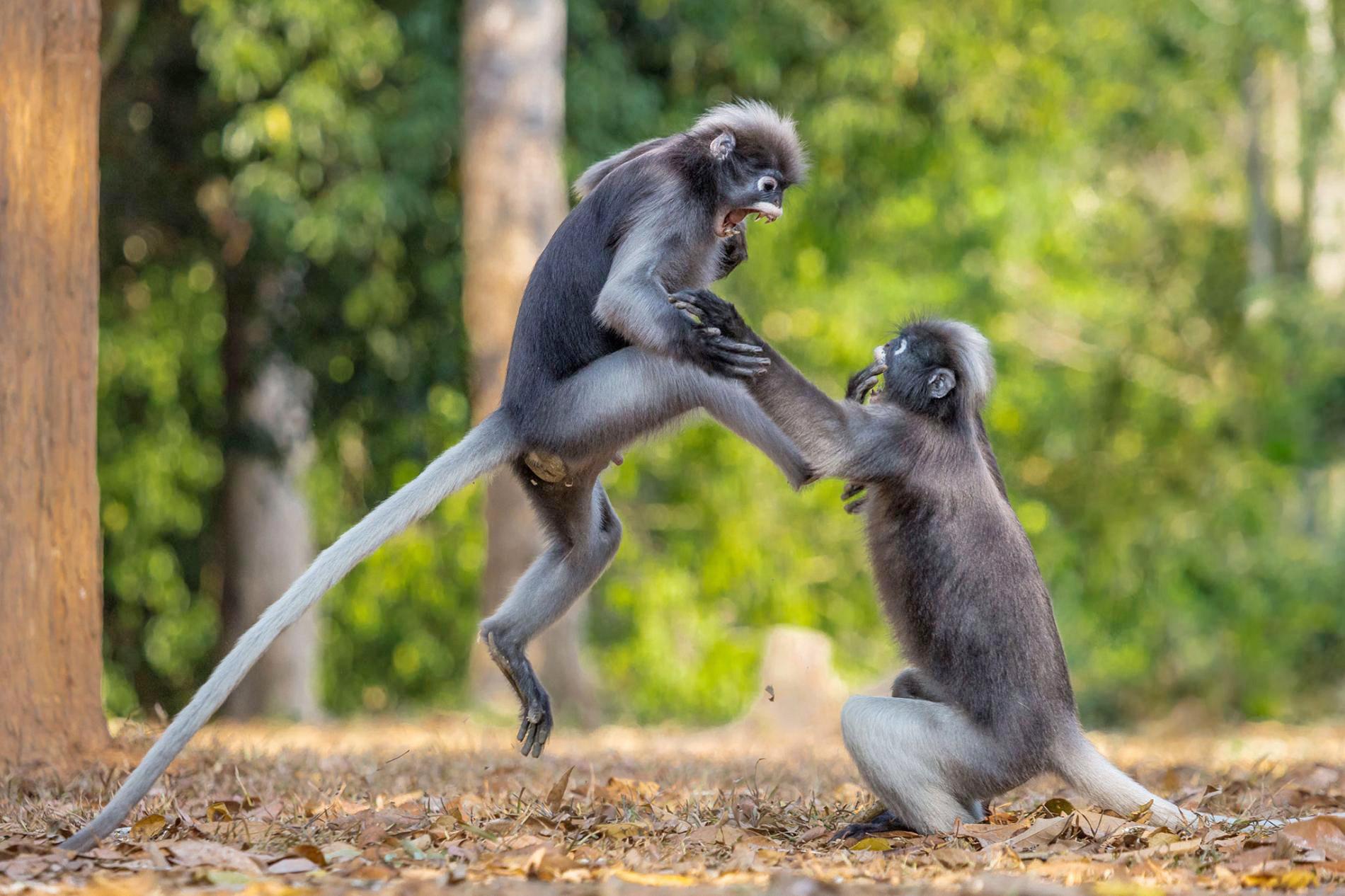 Конкурс самых смешных фотографий животных 2018