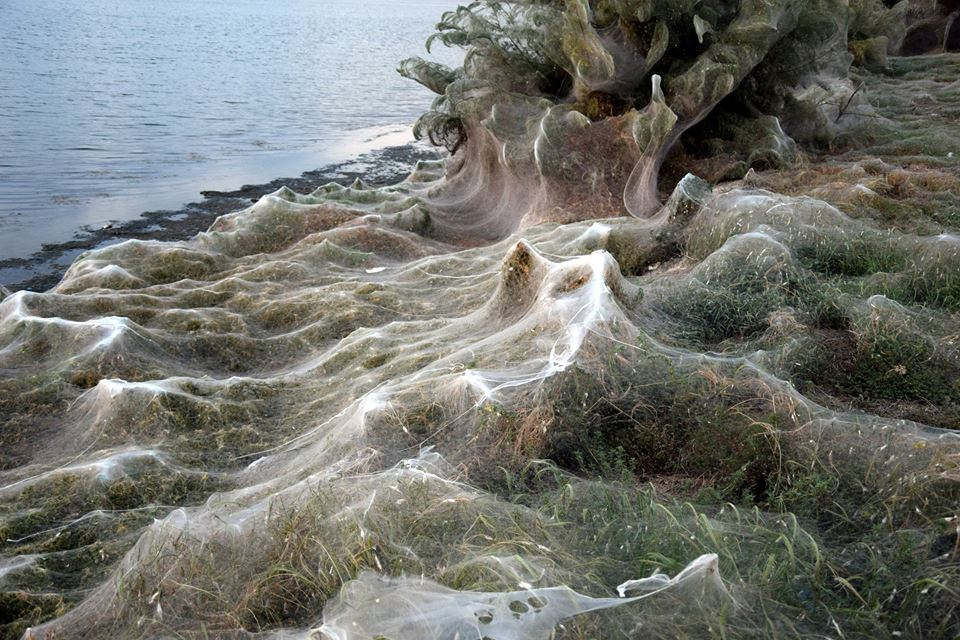 Паутина вдоль береговой линии в Греции