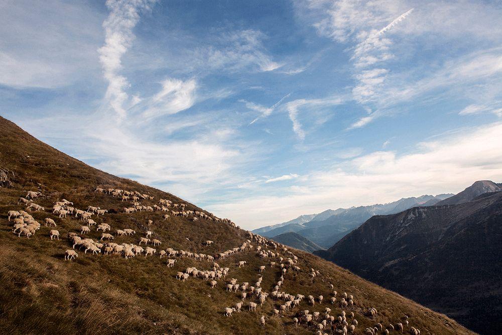 Школа пастухов в объективе испанского фотографа Джоана Альвадо