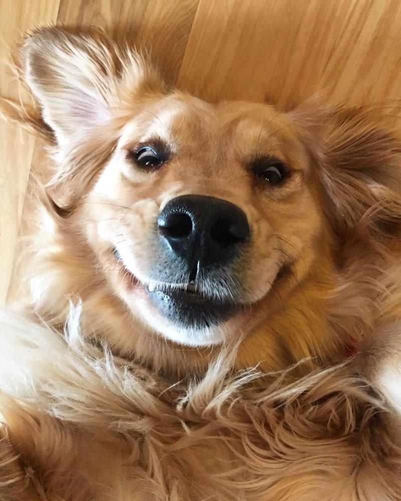 Собаки с очаровательными улыбками заряжают позитивом