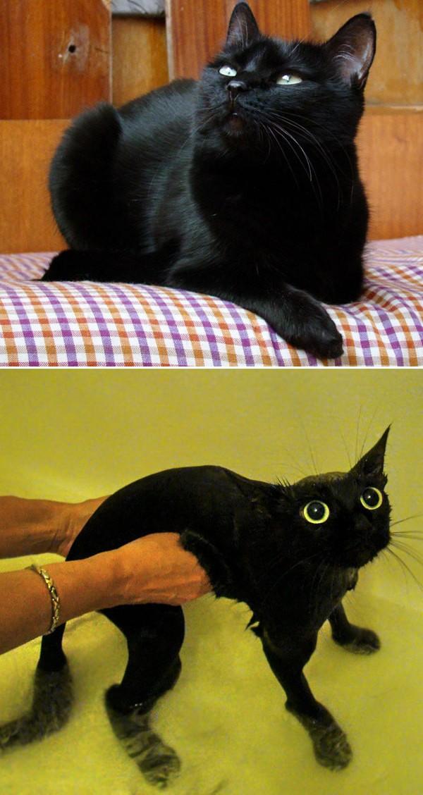 8 котов до и после помывки
