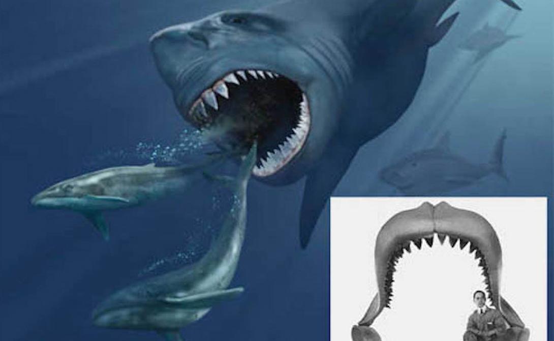Устрашающие акулы из морских глубин