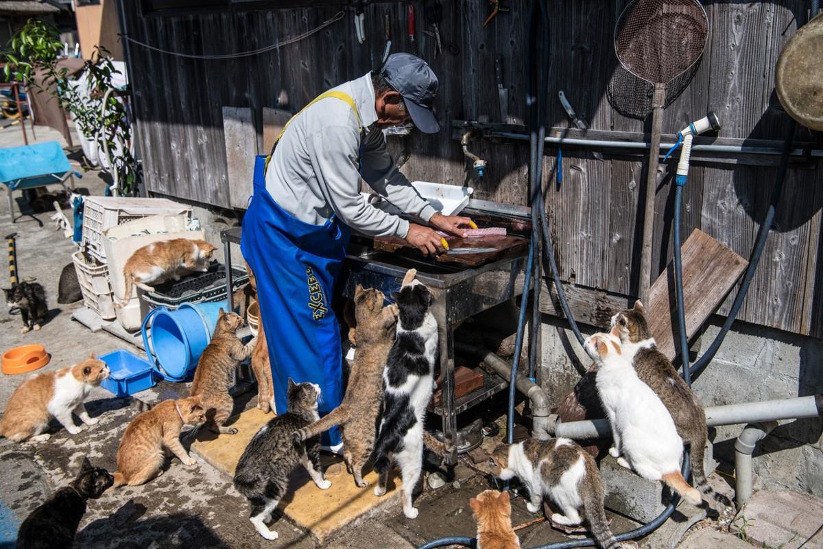Кошки расплодились на острове Аосима в Японии