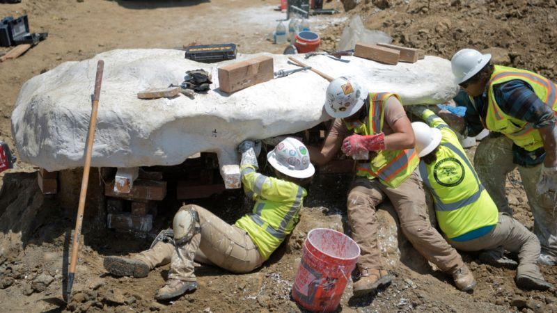 На стройплощадке нашли древнего кита, вымершего много миллионов лет назад