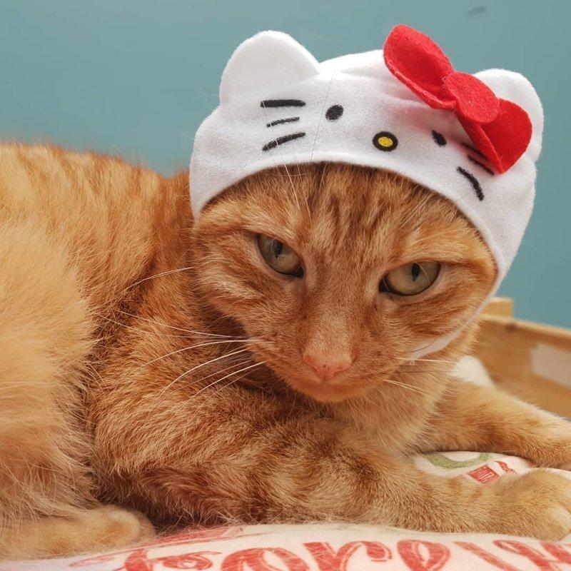 Милые котики в маленьких шапках и шляпах