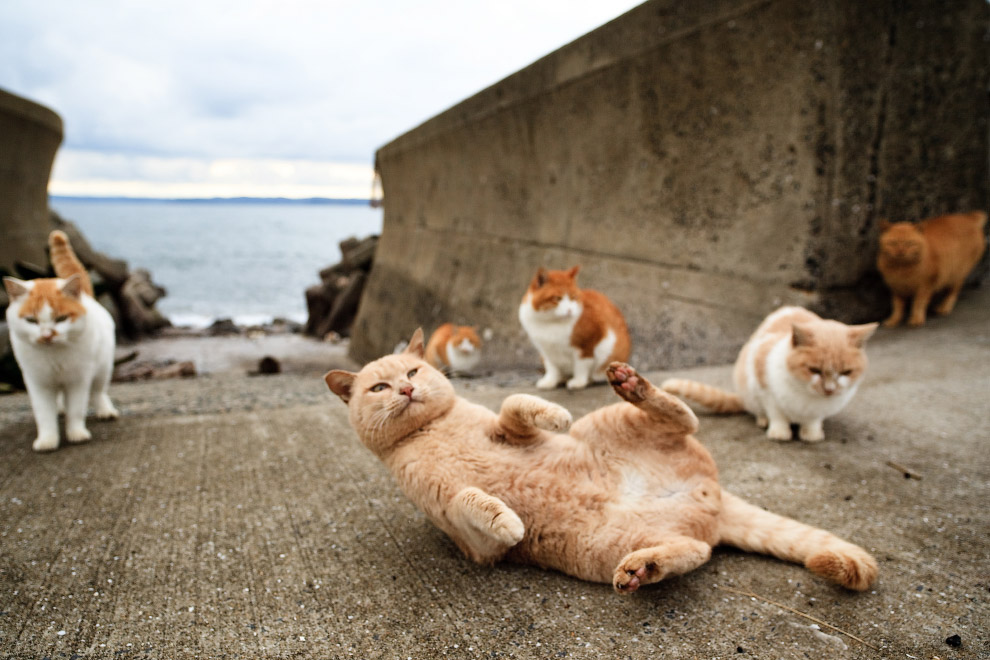 Тасиро - остров Кошек