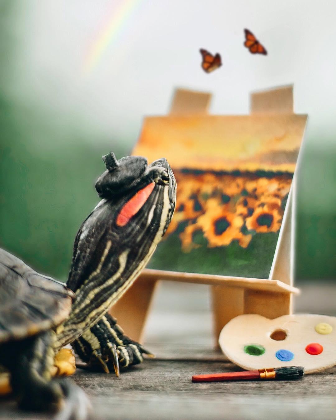 Приключения пары черепах на снимках в Instagram