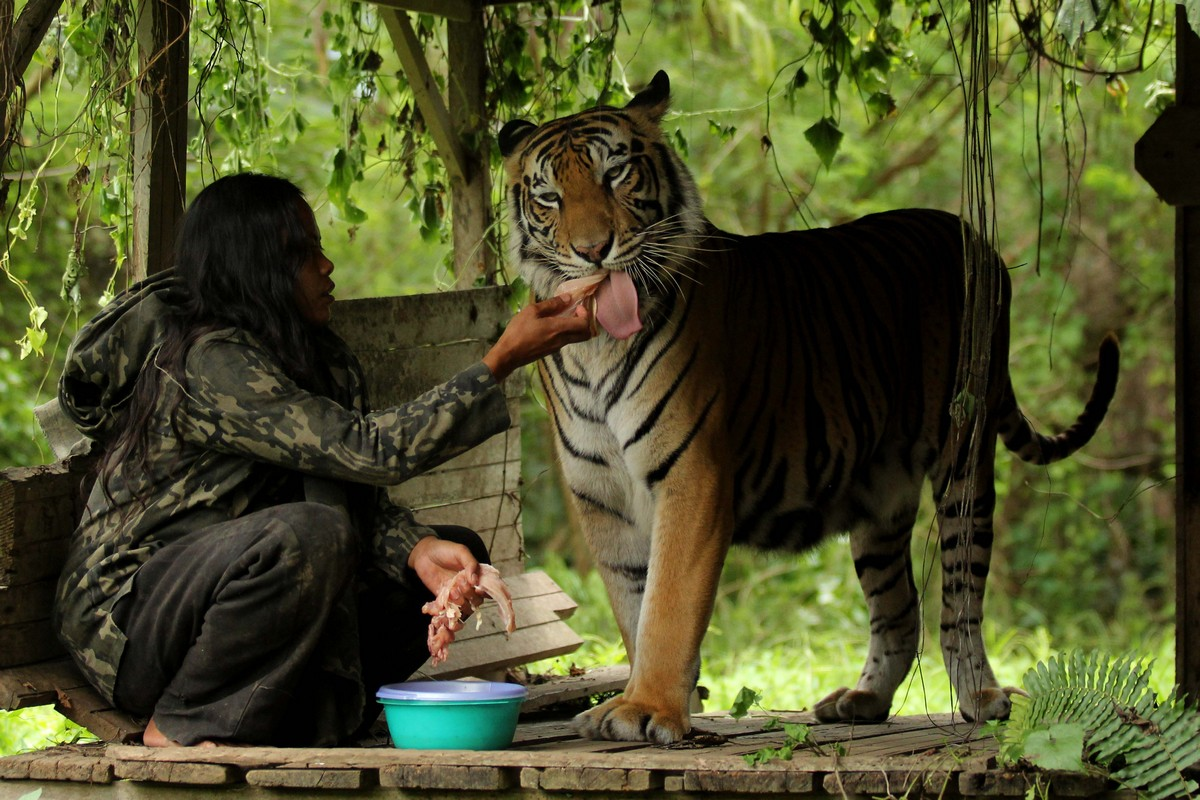 Индонезийская учительница уже 10 лет живет с тигрицей