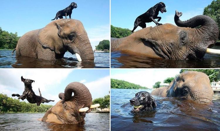 Кадры умилительной дружбы зверей