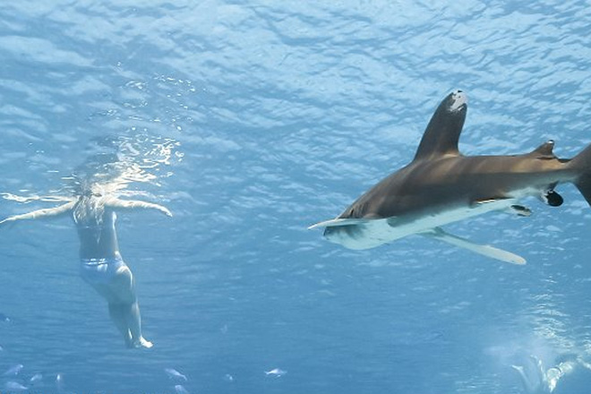 Как отбиться от акулы