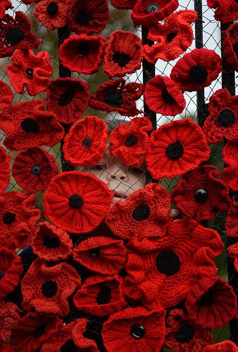 Ковер из маков в честь 100-летия окончания Первой мировой войны