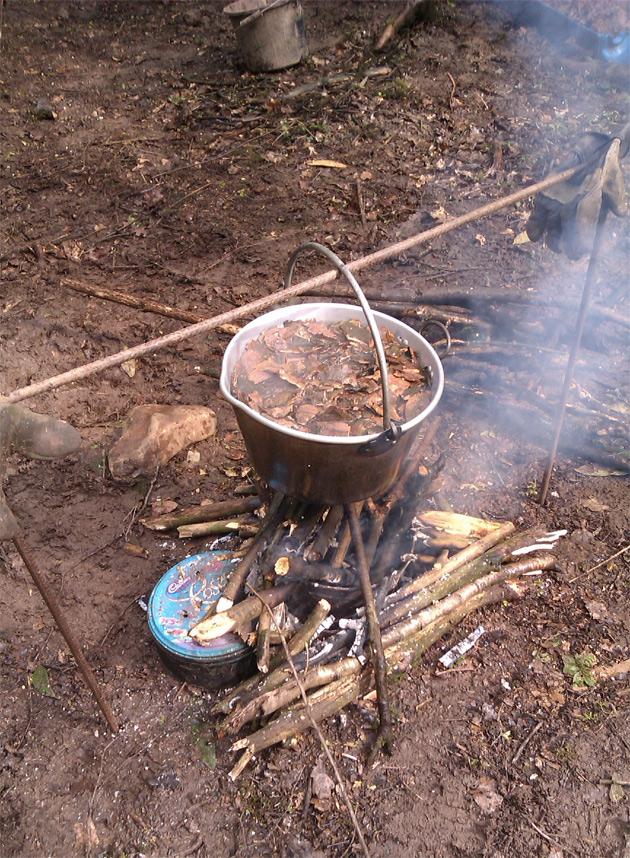 Использования древесной коры для выживания