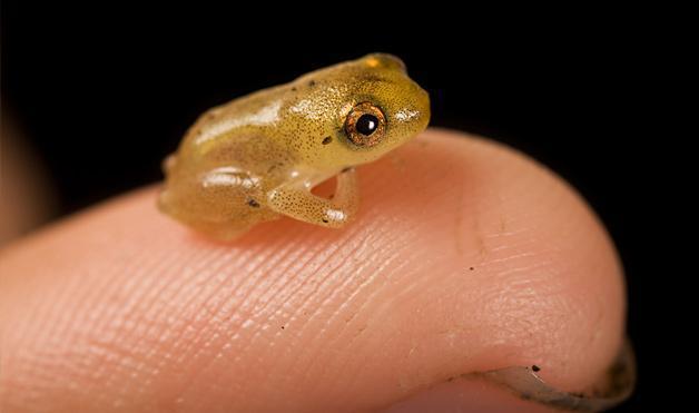 10 самых маленьких вещей и живых существ