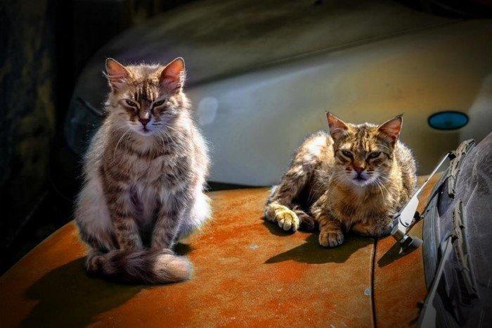 Подборка суровых и опасных котов