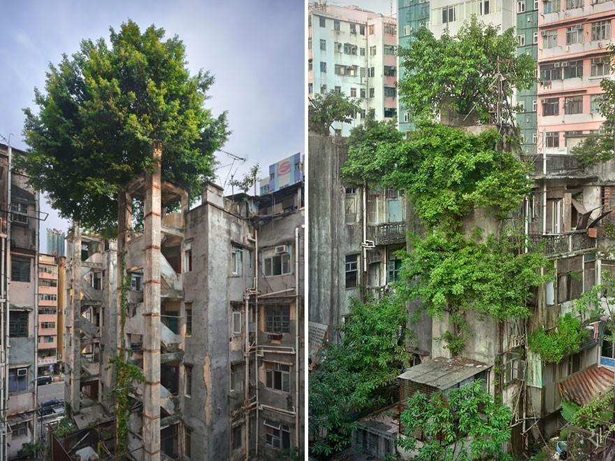 Фотографии, на которых природа победила цивилизацию