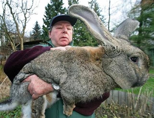 Животные, которые просто огромны
