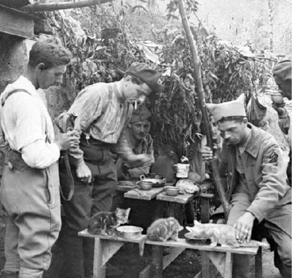 Бесстрашные коты времен Первой мировой войны