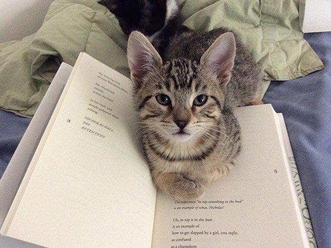 Коты мешают своим хозяевам читать