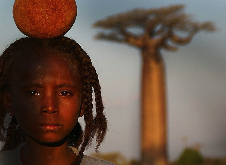 Baobab - a világ legszokatlanabb fája