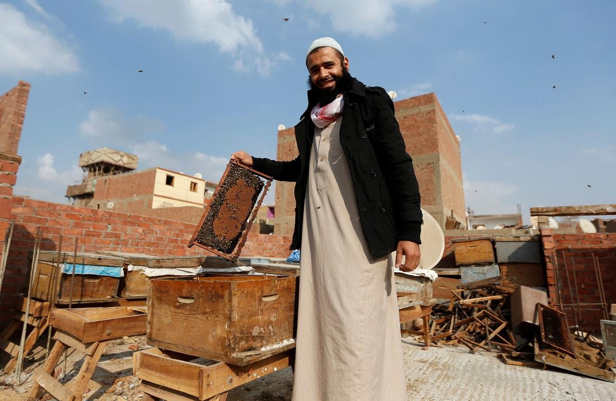Египтянин лечит людей укусами пчёл