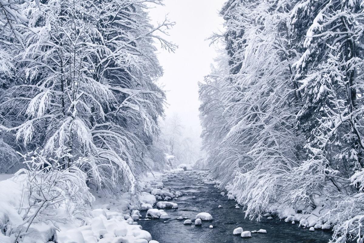 Пейзажные снимки заснеженных горных лесов Европы