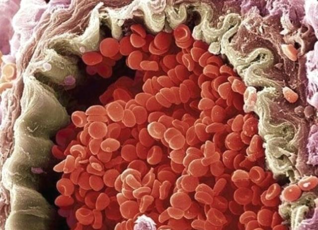 Интересные гифки и изображения, которые расскажут о теле человека