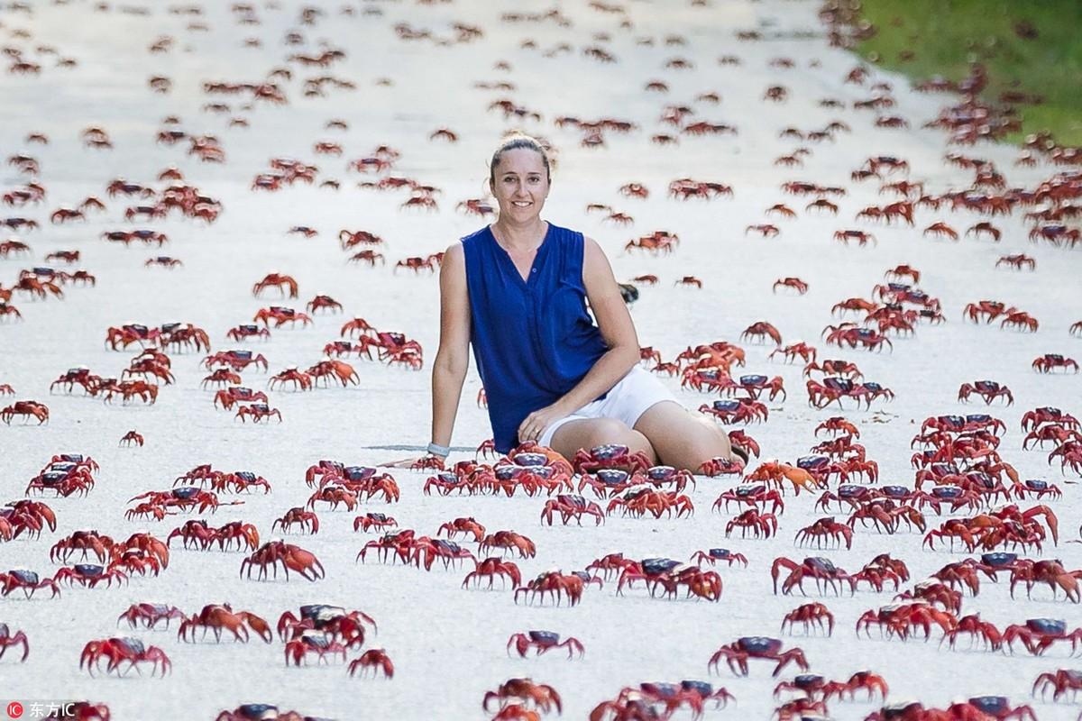 Миграция крабов на острове Рождества