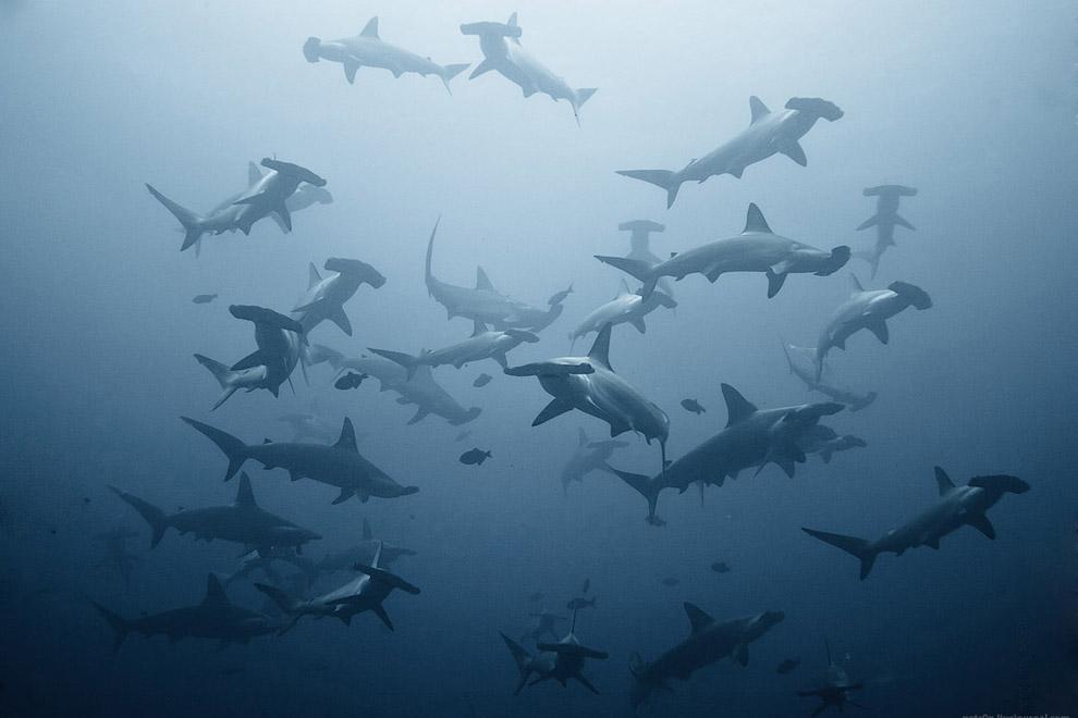 Подводный мир в фотографиях Александра Сафонова