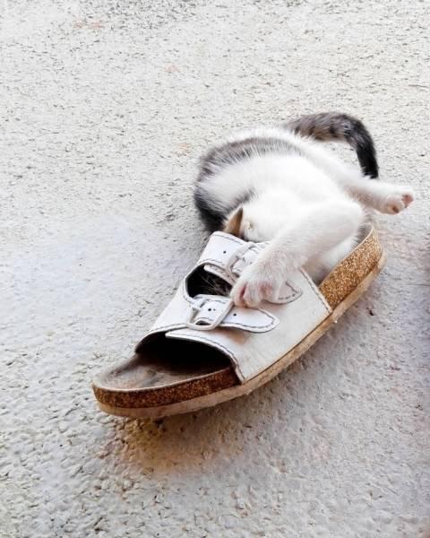 Непостижимая кошачья логика