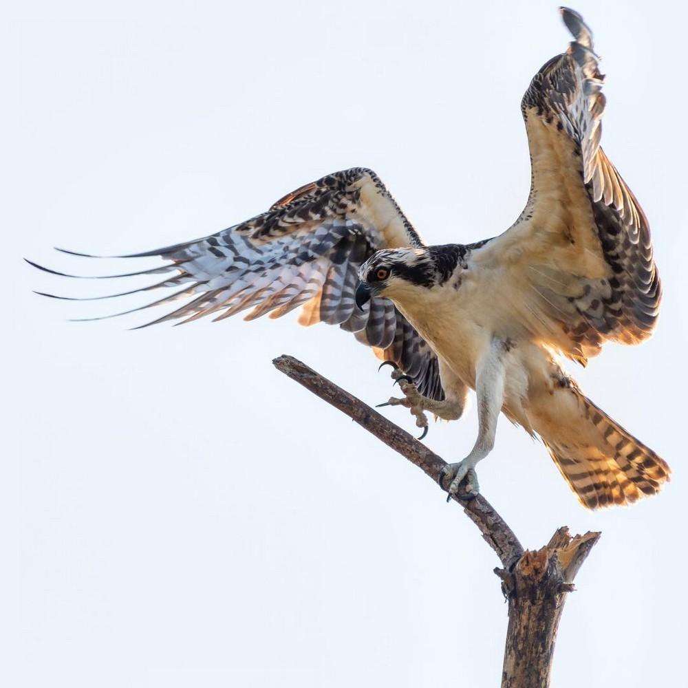 Красота птиц на фотографиях Адама Берри