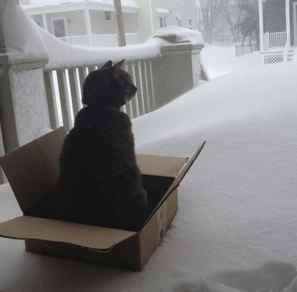 Трудности взаимоотношений кошек со снегом