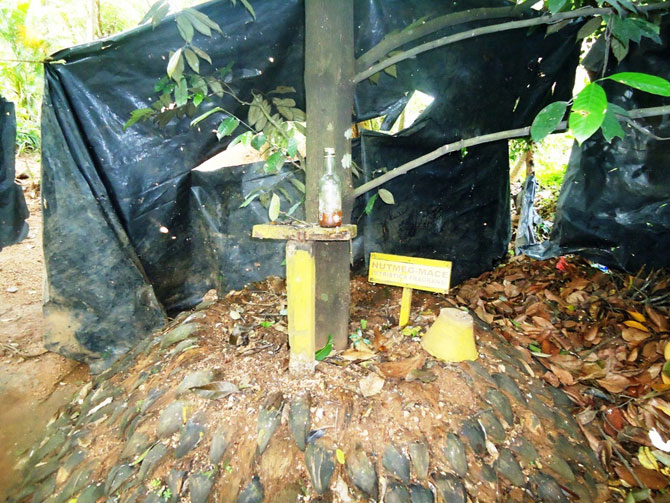 Сад специй в Шри-Ланке