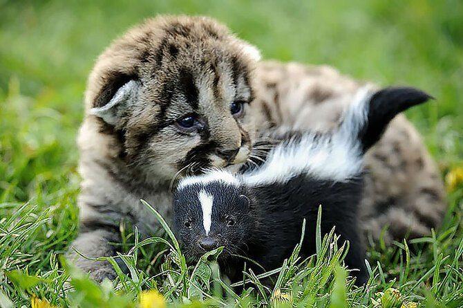 Трогательная дружба между разными животными