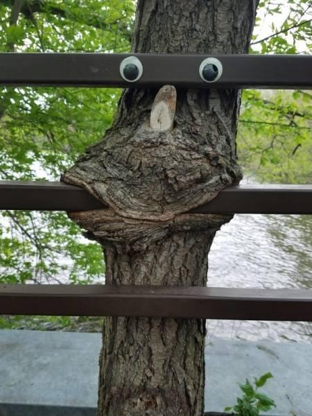 Как деревья поглощают всё вокруг