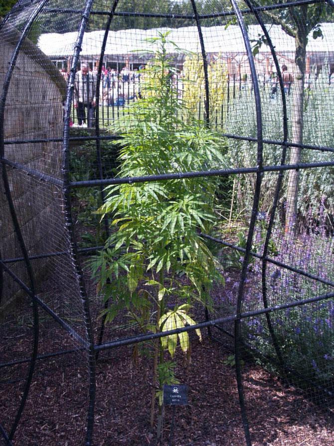 A mérgező növények kertje Alnvika Angliában