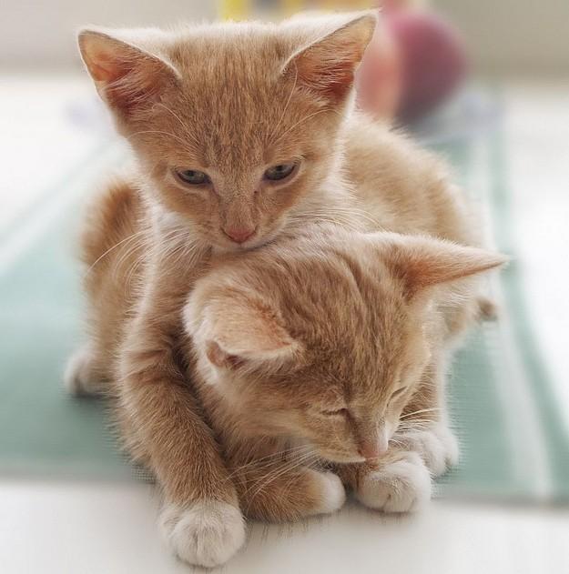 Macska szerelem és ölelés a képen