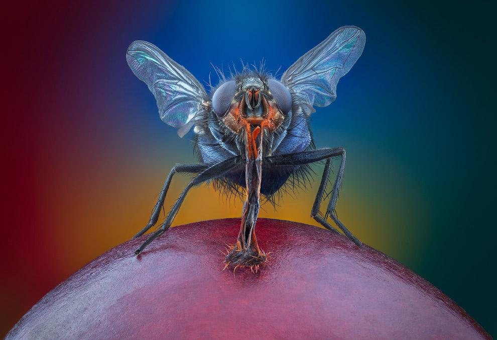 Макрофотографии насекомых от Василия Меньшова