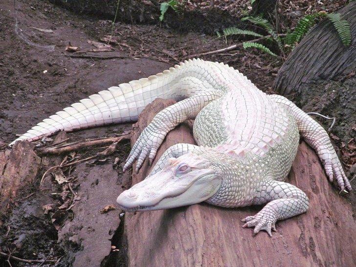 Csodálatos kinézetű albínó állatok