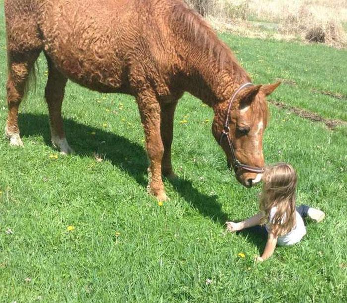 Кучерявые лошади - чудо природы