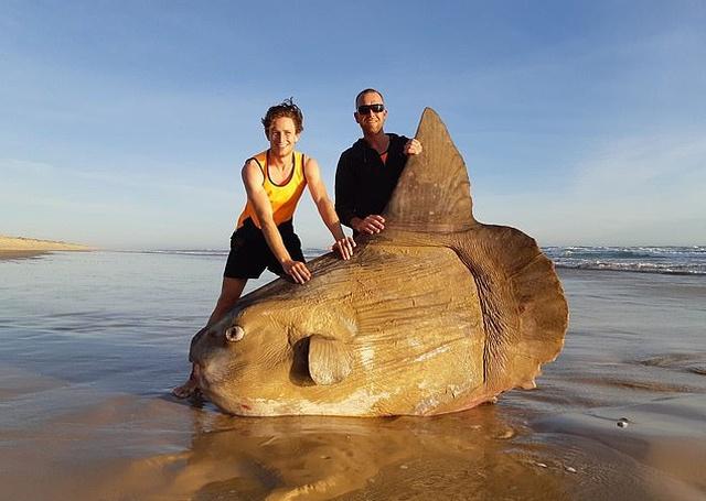 Рыбаки из Австралии обнаружили на мелководье редкую рыбу-солнце