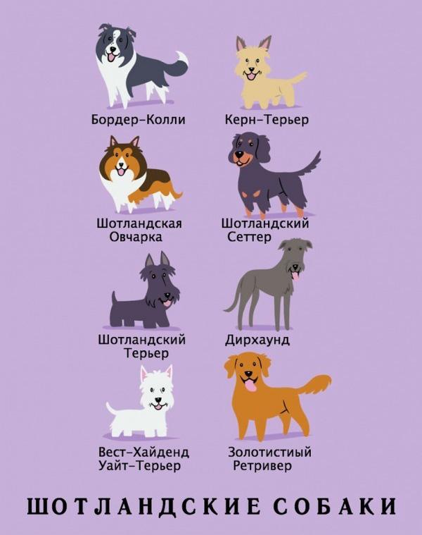 Какой национальности порода вашей собаки