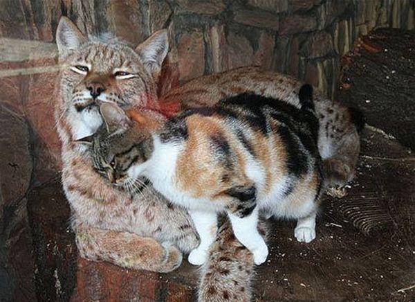 Кот навестил своего сородича за решеткой