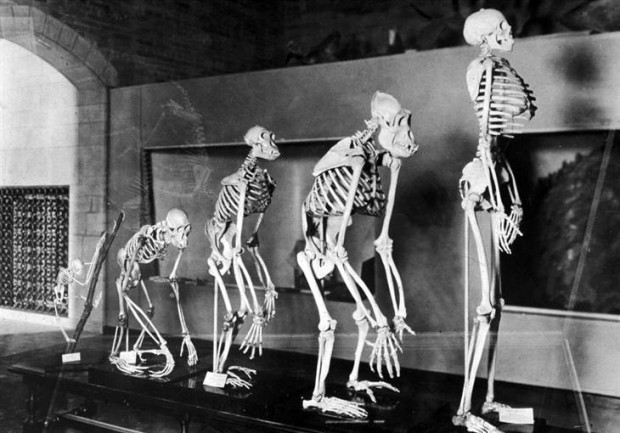 О странностях эволюции человечества