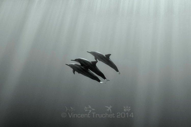 Подводные фотографии